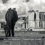 Neilson Hubbard - Cumberland Island
